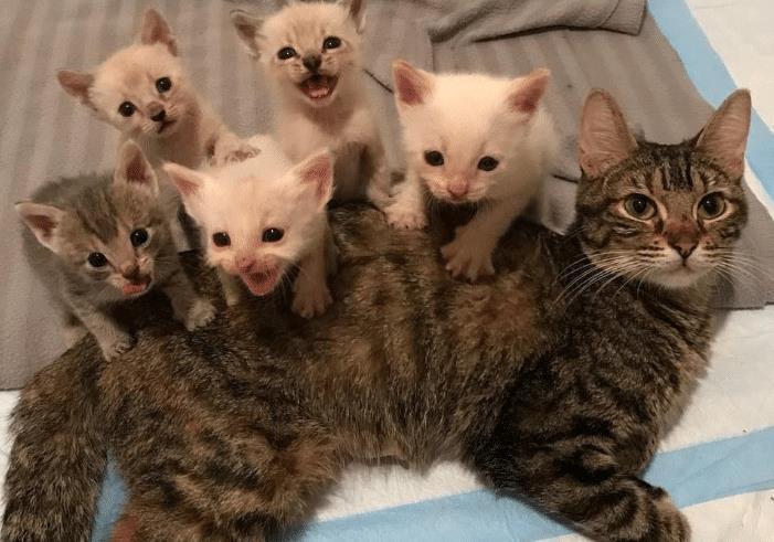 怀孕母猫成了保护动物为了让母猫顺利生产多项工作要做好